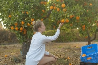 Citrus Farm Business for Sale in Florida | Truforte Business Group