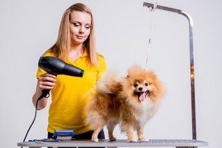 Pet Grooming and Boarding Business for Sale | Truforte