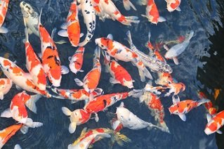 Fish Farm for Sale in Florida | Truforte Business Group